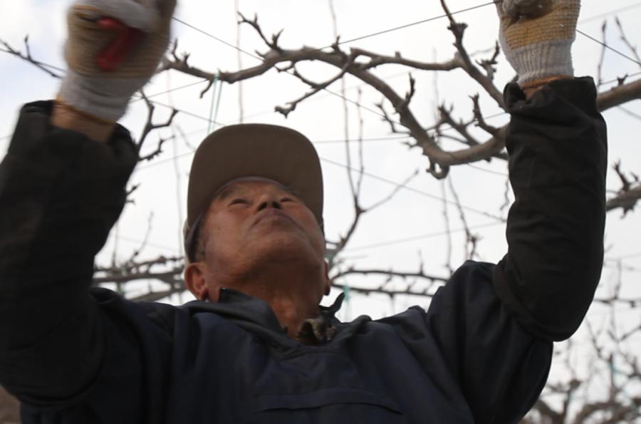 japan farmer