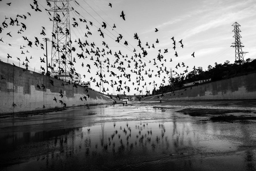 Pigeons over LA River